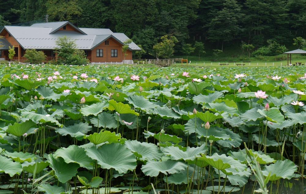 明見湖(はす池)